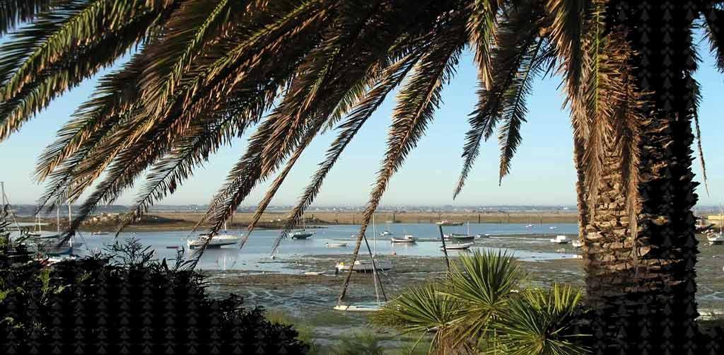 palmiers-micro climat-plantes exotiques-ile de batz